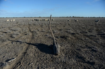 Sheep in a dry paddock at a drought-affected property near Lightning Ridge, NSW.