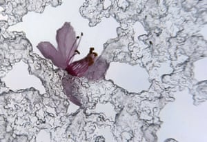 The blossom of a cherry tree lays amidst sleet on a roof window in Kaufbeuren, southern Germany