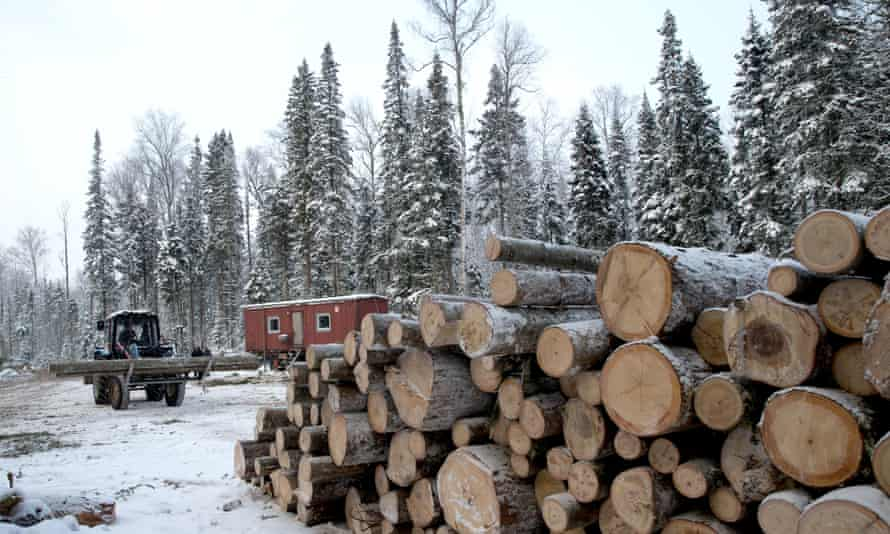 Timber cutting and processing in Omsk, Russia.
