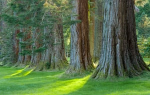Benmore's Giant Redwood, Dunoon