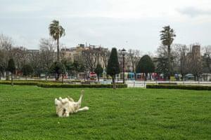 Istanbul, Turkey A dog enjoys an empty Sultanahmet Square
