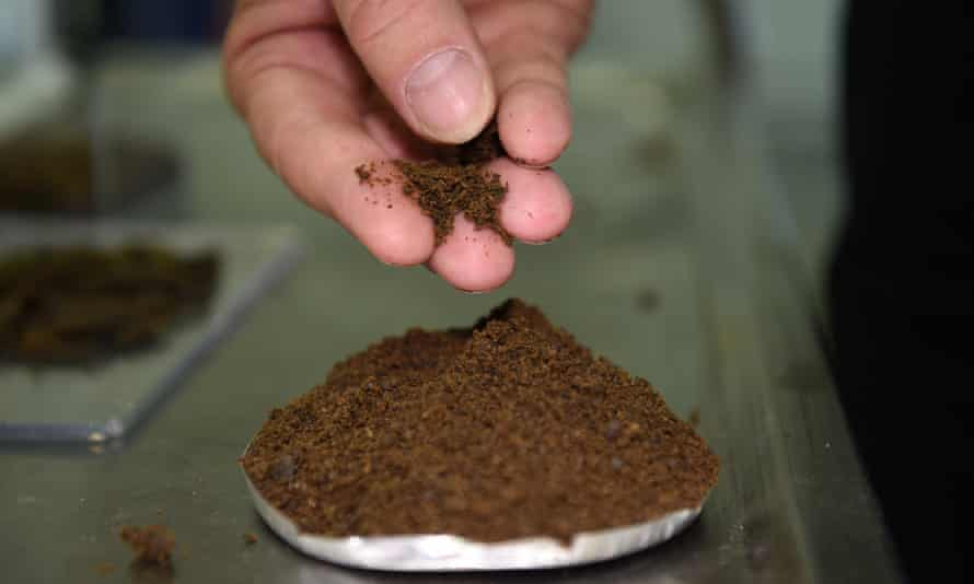 Protein compact powder derived from black soldier fly larvae