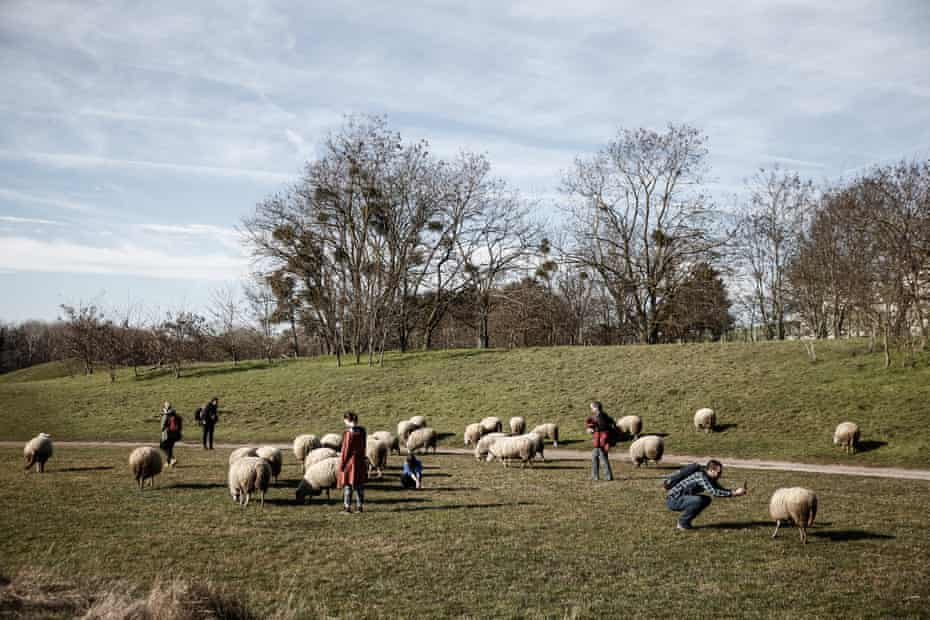 People look at sheep in a green space