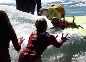 A junior lifeguard prepares to catch a dog as it jumps from the surfboard