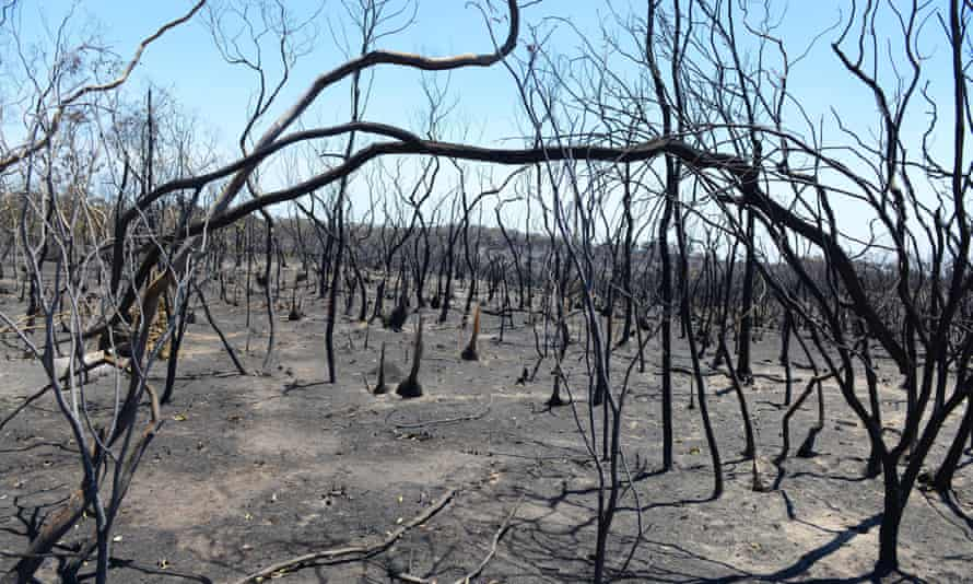 Charred trees and bushes stand amid the aftermath of a bushfire near One Tree Hill in the Adelaide Hills in January 2015.