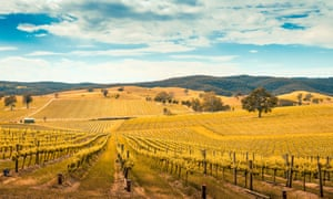 'There is now a sweep of styles, from the reds of Barossa shiraz (pictured above) to champagne-like fizz from Tasmania.'