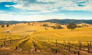 Wine valley in BarossaPicturesque wine valley in Barossa, South Australia. Color-toning effect appplied