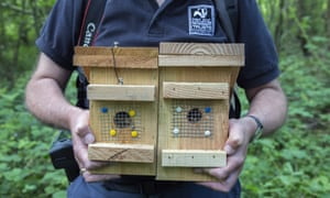 Nestboxes are used as part of a reintroduction project in Nottinghamshire