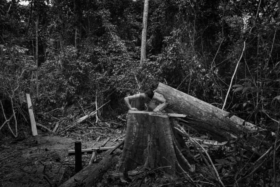 A member of the Guajajara forest guard in a moment of sad silence at the sight of a toppled tree cut down by illegal loggers on the Araribóia indigenous reserve in Maranhão state.