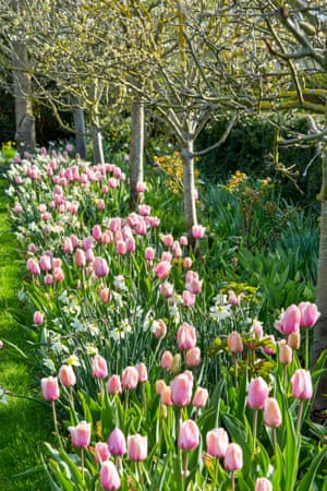 The spring walk with 'Salmon Impression' tulips and Narcissus 'Pueblo'.