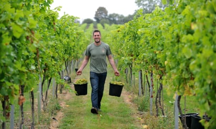 Working at RAU's vineyard
