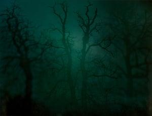In Darkness Visible (Verse I), no 14, 2007 by Nicholas Hughes