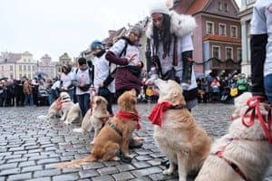 Poznań, Poland: people perform with their golden retrievers during a dog obedience show to collect money at the 27th grand finale of the Great Orchestra of Christmas charity event