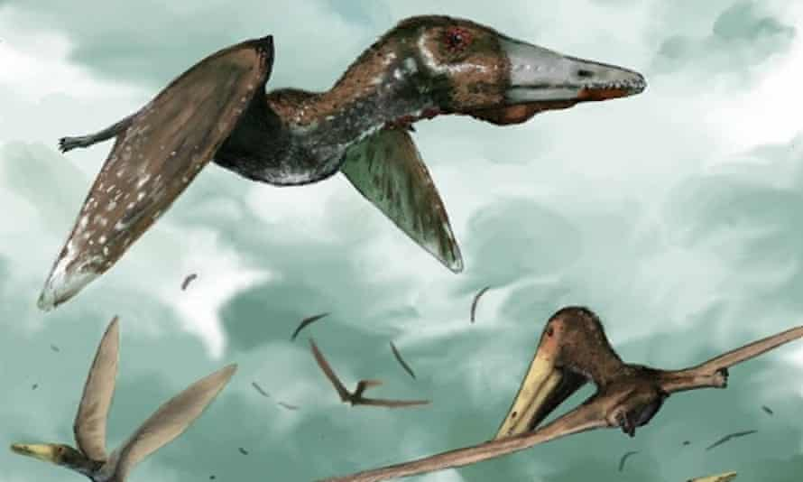 A modern view of the fuzzy, flying pterosaurs