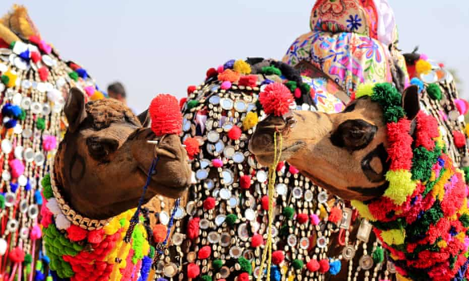 Camels perform in a decoration competition at the Pushkar camel fair in Pushkar, Rajasthan, India, on 17 November 2018.