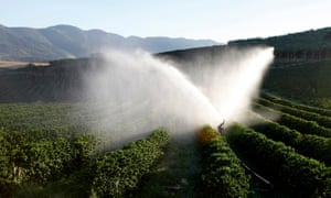 Coffee trees are irrigated on a farm in Brazil