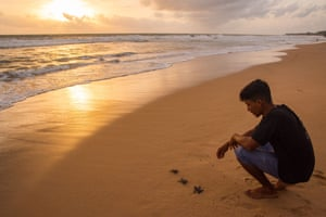 Sri Lanka Charith, a tsunami survivor, releases newly hatched sea turtles on the beach at sundown