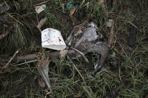 A dead pelican lies in the rubbish of the Tarcoles river, Costa Rice, one of the most polluted basins in Central America.