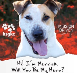 Nobody came for Merrick until his new owner, Jordan Nussbaum, saw the photograph on a billboard in the city.