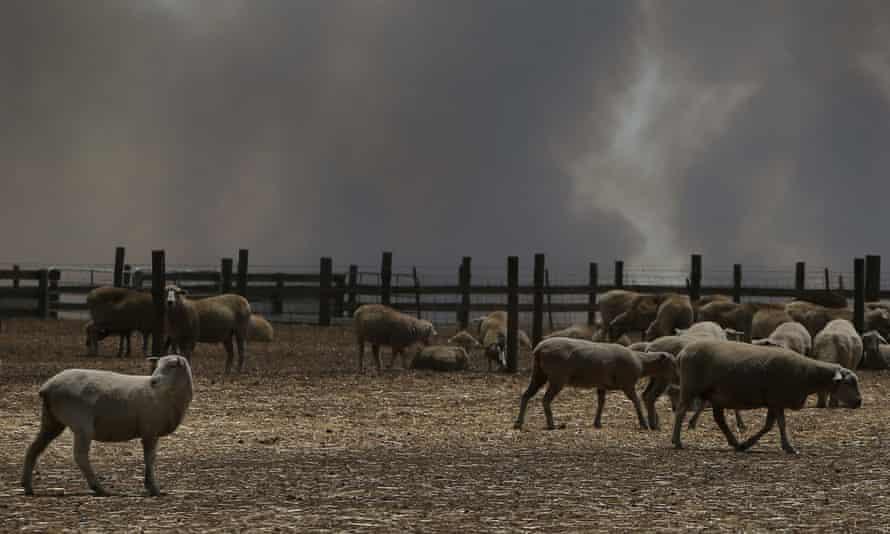 Bushfire smoke over a sheep property on Kangaroo Island