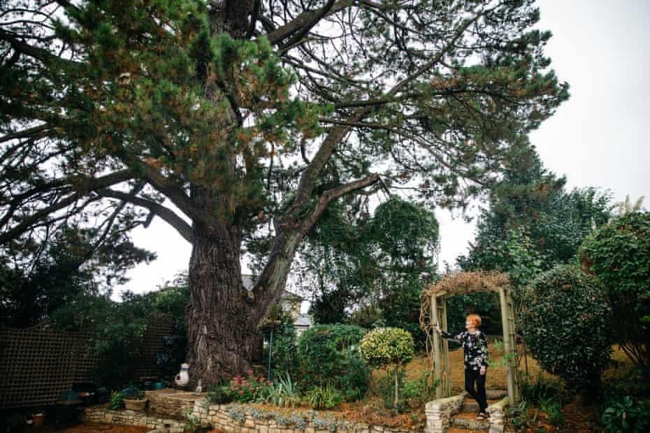 Eileen Paddock's garden in the village of Batheaston, where the last suffragettes' pine still stands