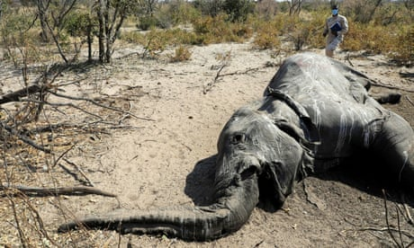 Why are elephants dying? The race to solve the mystery of mass die-offs