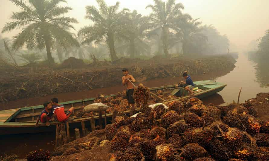 Palm fruit is unloaded from a small boat on a river on the Indonesian island of Sumatra