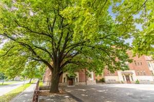 Hungary: the Freedom Tree in Kaposvar93-year-old common oak (Quercus robur), Kaposvar, Somogy countyThe oak standing in a schoolyard in Kaposvar was planted in 1929 to mark the major milestones in Hungarian history.