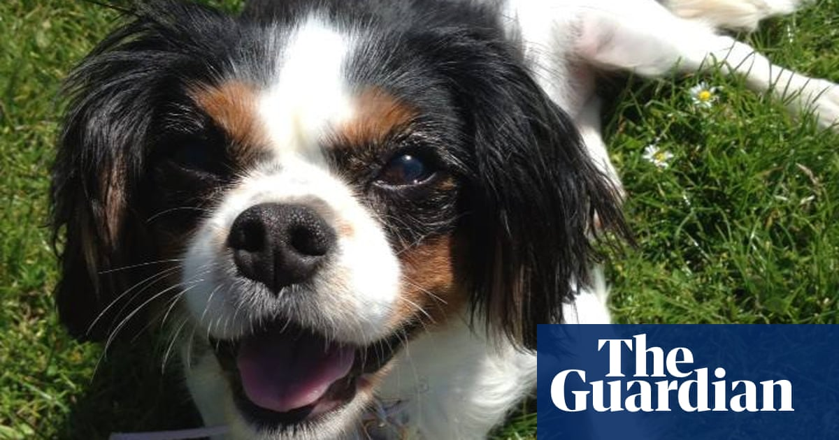 Puppy and kitten farming to be banned under 'Lucy's law'