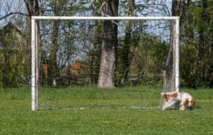 A dog makes its mark on a goalpost in Ryazantsevo settlement in Yaroslavl region