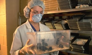 3.04 million procedures were carried out on mice in UK laboratories in 2015.