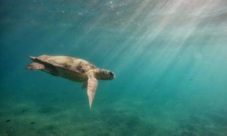 Loggerhead Turtle at Laganas Beach, Zakynthos