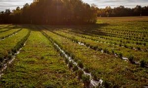 The Virginia First Tea Farm property near Spotsylvania, Va.