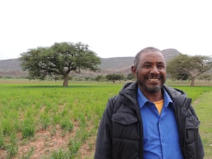 Community leader Gebremichael Giday stands in a field in Abrha We Atsbha . Faidherbia albida trees, which provide nutrients to the newly sprouted cereal crop, are clearly visible behind him.