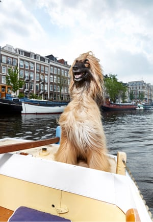 Afghan hound dog Barbur photographed by Isabella Rozendaal in Amsterdam.