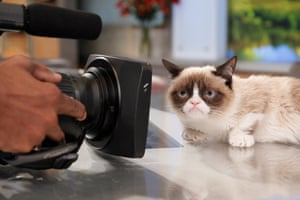 Grumpy Cat appears on Good Morning America in March 2013