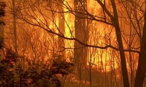 A Tasmanian bushfire