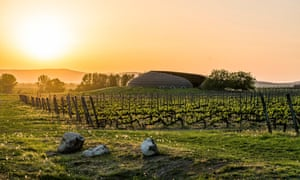 Vineyard in Tokaj at sunset, Hungary