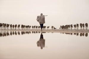 Salt miner taking a camel caravan to the mining site,  Afar region, Danakil Depression, Ethiopia