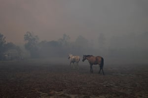 Scared horses try to move away from nearby bushfires at a residential property near Nowra.