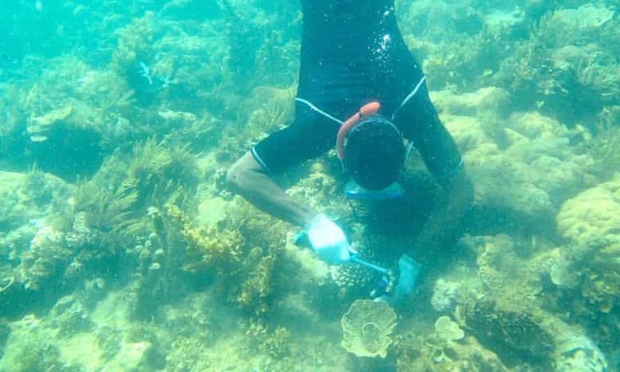 transplanting coral on wasini Island