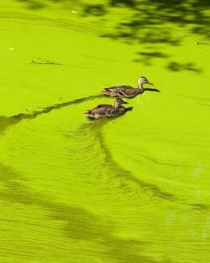 Massive algal bloomGettyImages-113183991