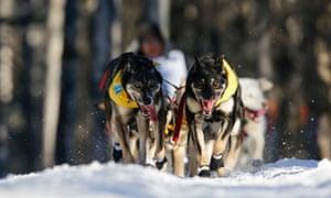 John Baker's team leaves restart of Iditarod in Willow, Alaska.