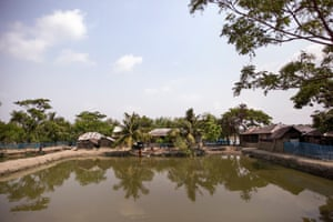 Shrimp pond in Datina Khali