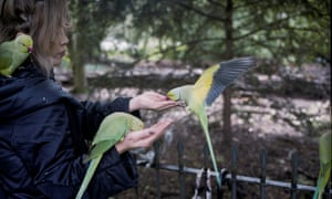 A woman feeds parakeets in London.