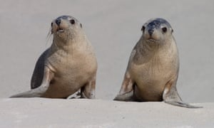 Seals on the beach at Seal Bay.