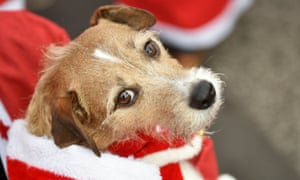 A dog dressed up as Santa Claus is seen in Michendorf near Berlin, Germany