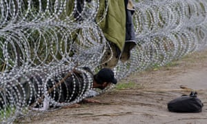 A man tries to climb through the razor-wire fence put up by the Hungarian authorities along the border with Serbia, near the village of Röszke.