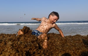 Gold Coast, Australia. Zac Maher plays in algae, known as 'cornflake seaweed' at Palm Beach. The council says the build up of the seaweed is due to current weather conditions and is a natural process at this time of year