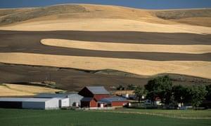 agricultural landscape near Pomeroy, Washington State